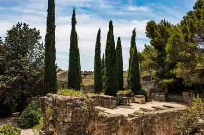 Focus sur huile essentielle de cyprès de Provence